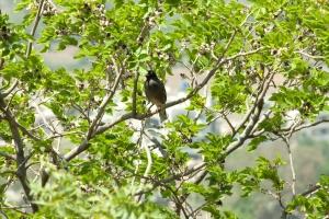 Vogel, Baum, Zweig, Tierwelt, Tier, grüne Blätter