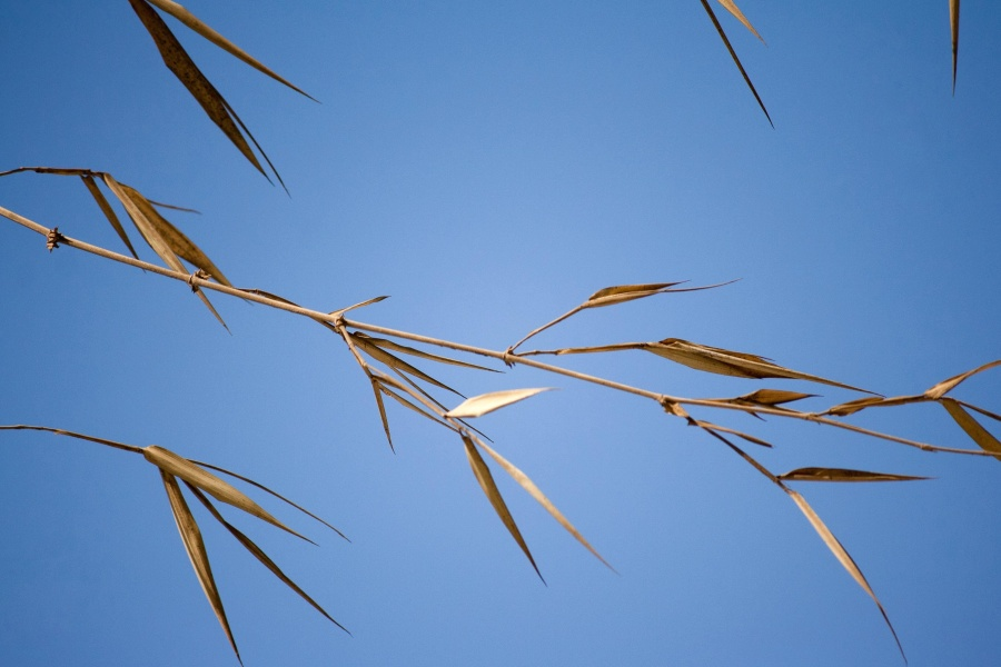 dry grass, blue sky, branch