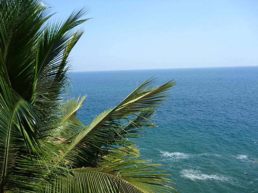 palm tree, blue sky, sea, beach, coconut, ocean, coast