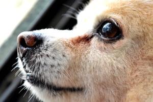 сладък, кучета, гледам, животни, хищници, домашни котки, домашни любимци