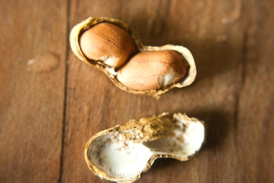 peanut, seed, food, diet, brown
