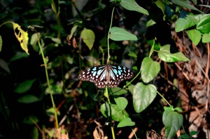 butterfly, blue, organism, plant, flower, summer, garden, insect