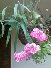 cây, chậu hoa, vườn, lá, mùa hè, Hoa