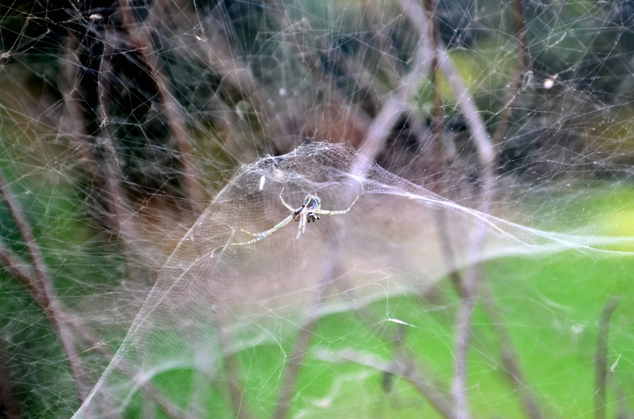 spider web, insect, branch, animal