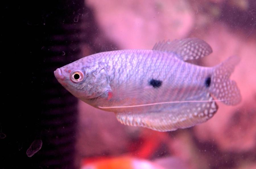 hal, állat, tenger, tengeri hal, víz alatti