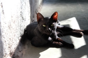 black cat, feline, kitten, animal, pet, domestic cat, fur, shadow