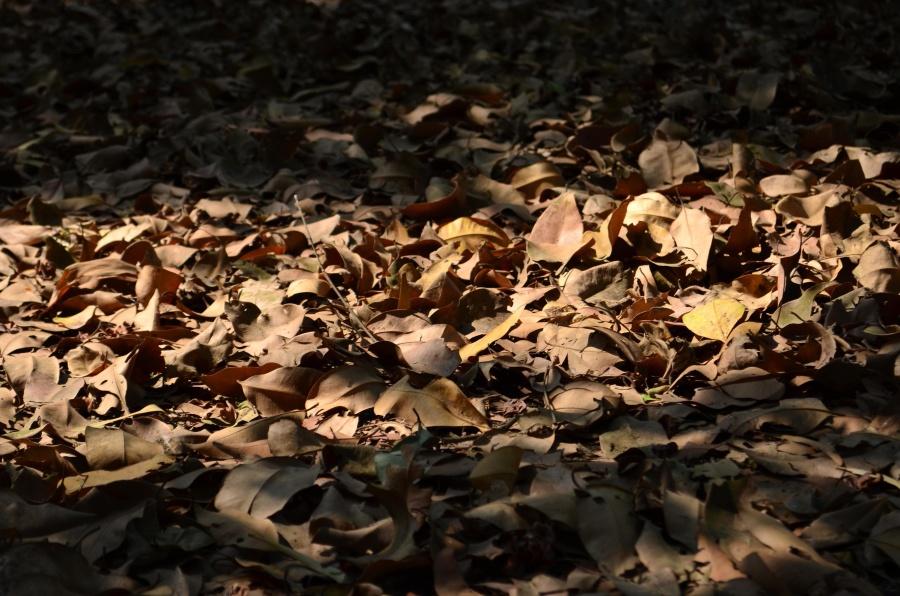 dark, sahdow, leaves, ground, forest
