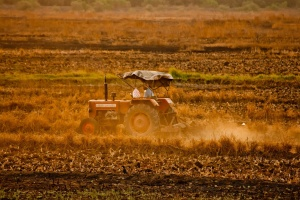 tractor, crops, work, agriculture, India