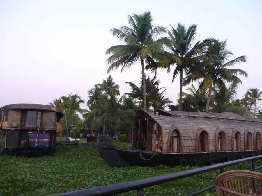 boat, swamp, tourism, palm tree, ship