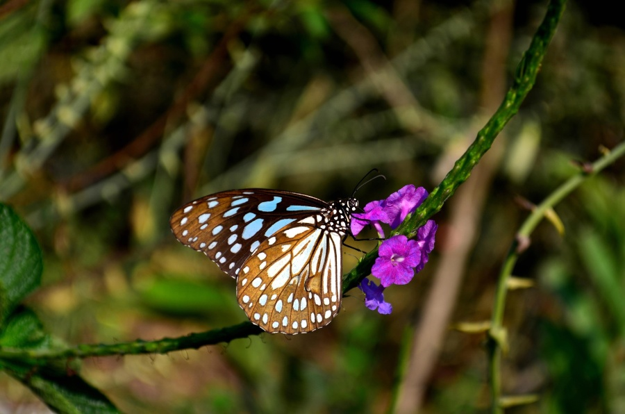 butterfly, flower, insect, colorful, metamorphose