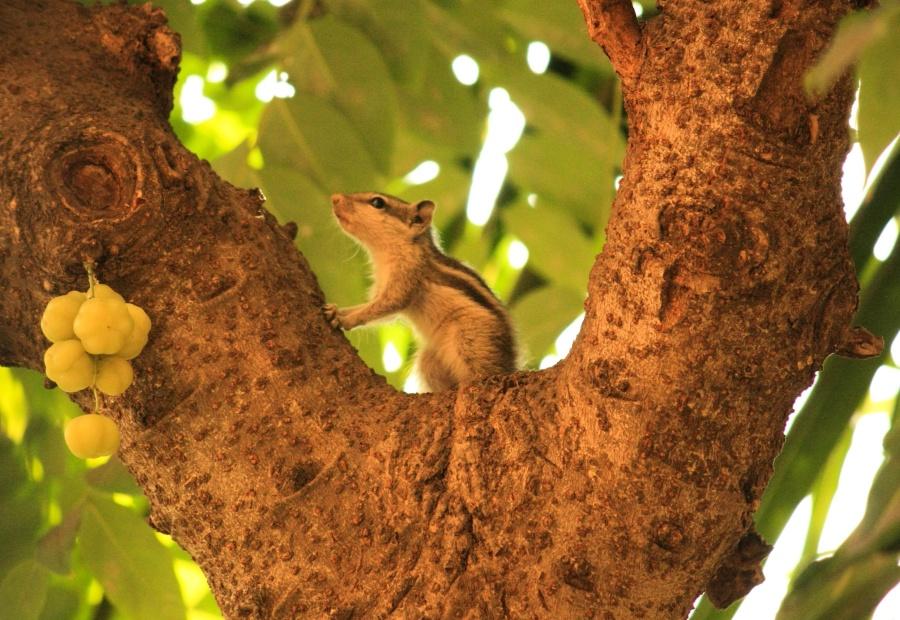 squirrel, animal, tree