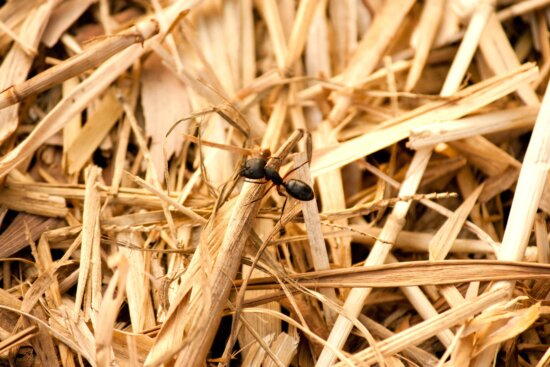 black ant, macro, insect, leaf