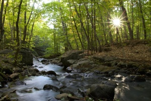 Rio, floresta, sol, natureza, paisagem, árvores, água, cachoeira, Rio