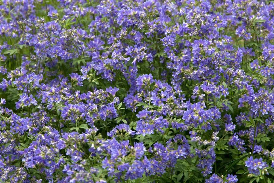 wildflower, meadow, herb, nature, flower, summer, lilac, flower