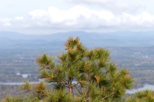 conifer, branch, leavf, nature, pine tree, sky, cloud, mountain