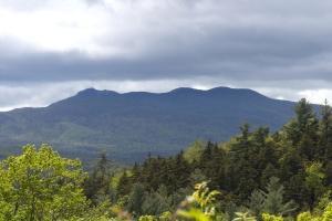 pădure, natura, peisaj, munte, copac, frunze, sky, nor