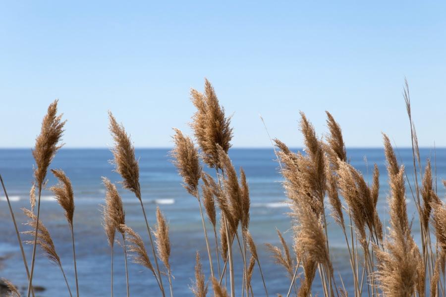 nature, landscape, ocean, water, summer, sky, grass