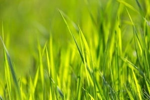 grass, green, macro, nature