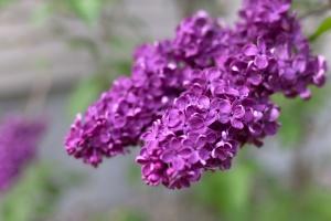 Makro, Blütenblätter, Garten, Natur, Blumen