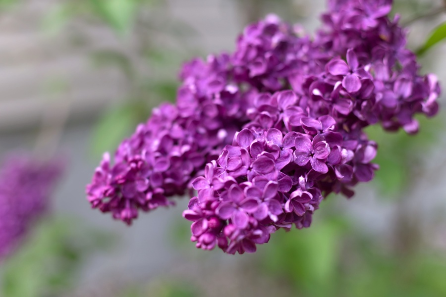macro, petals, garden, nature, flowers