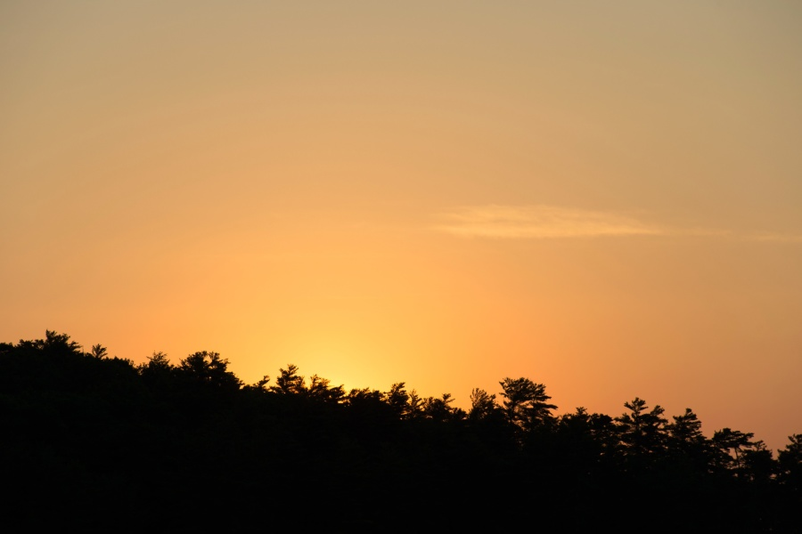 nature, sky, silhouette, trees, sunset, summer
