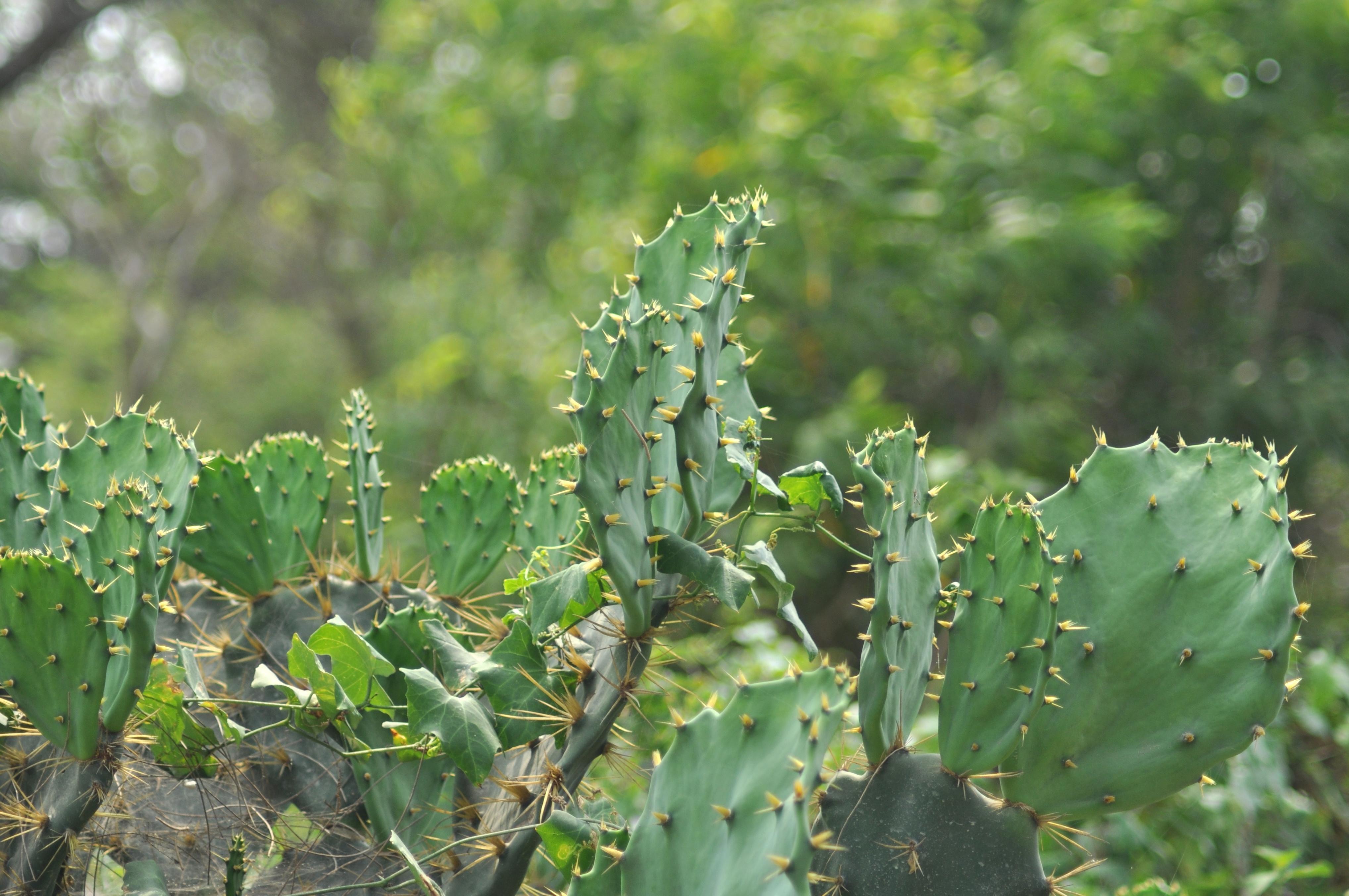 kostenlose bild kaktus pflanze gr n w ste kraut dorn. Black Bedroom Furniture Sets. Home Design Ideas
