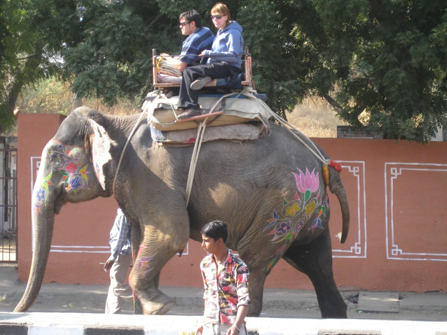 elephant, tourist, India, street, colorful