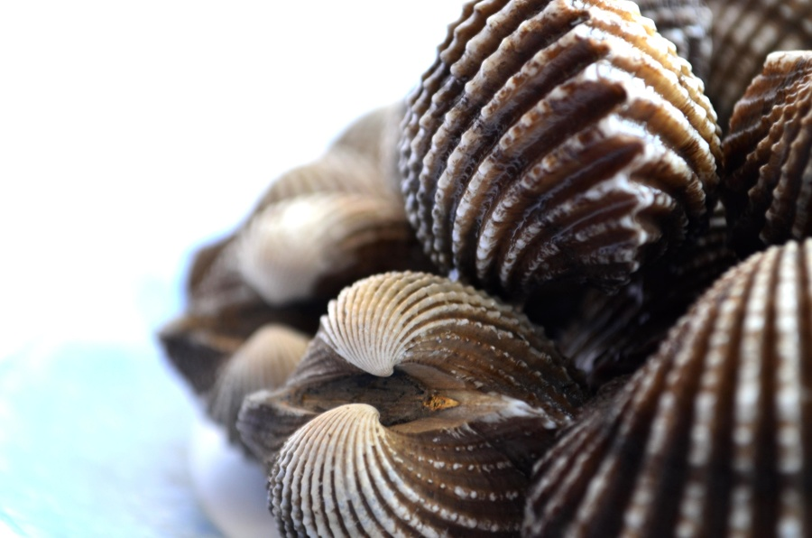 seashells, mollusk, still life, object, decoration, macro