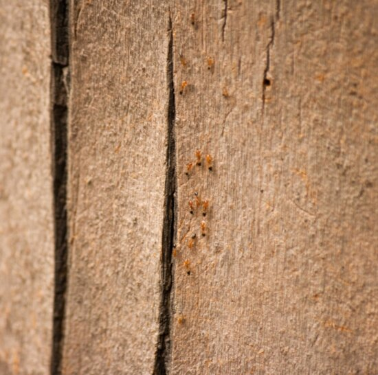 red ant, insect, colony, material, wood, brown