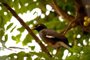 exotic bird, tropical, rainforest, animal, bird