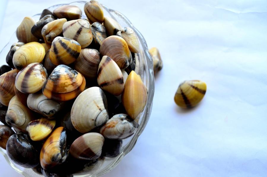 skål, stilleben, dekoration, snäckskal, mollusk