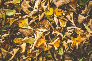 brown leaf, autumn, ground