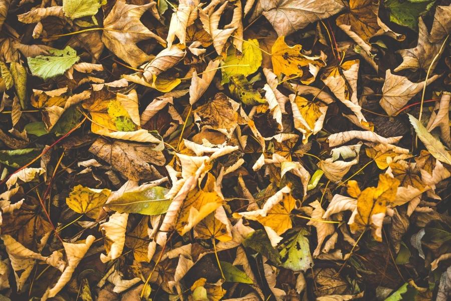 brown leaf, autumn, ground