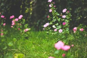 petal, flower, blossom, herb, garden, meadow