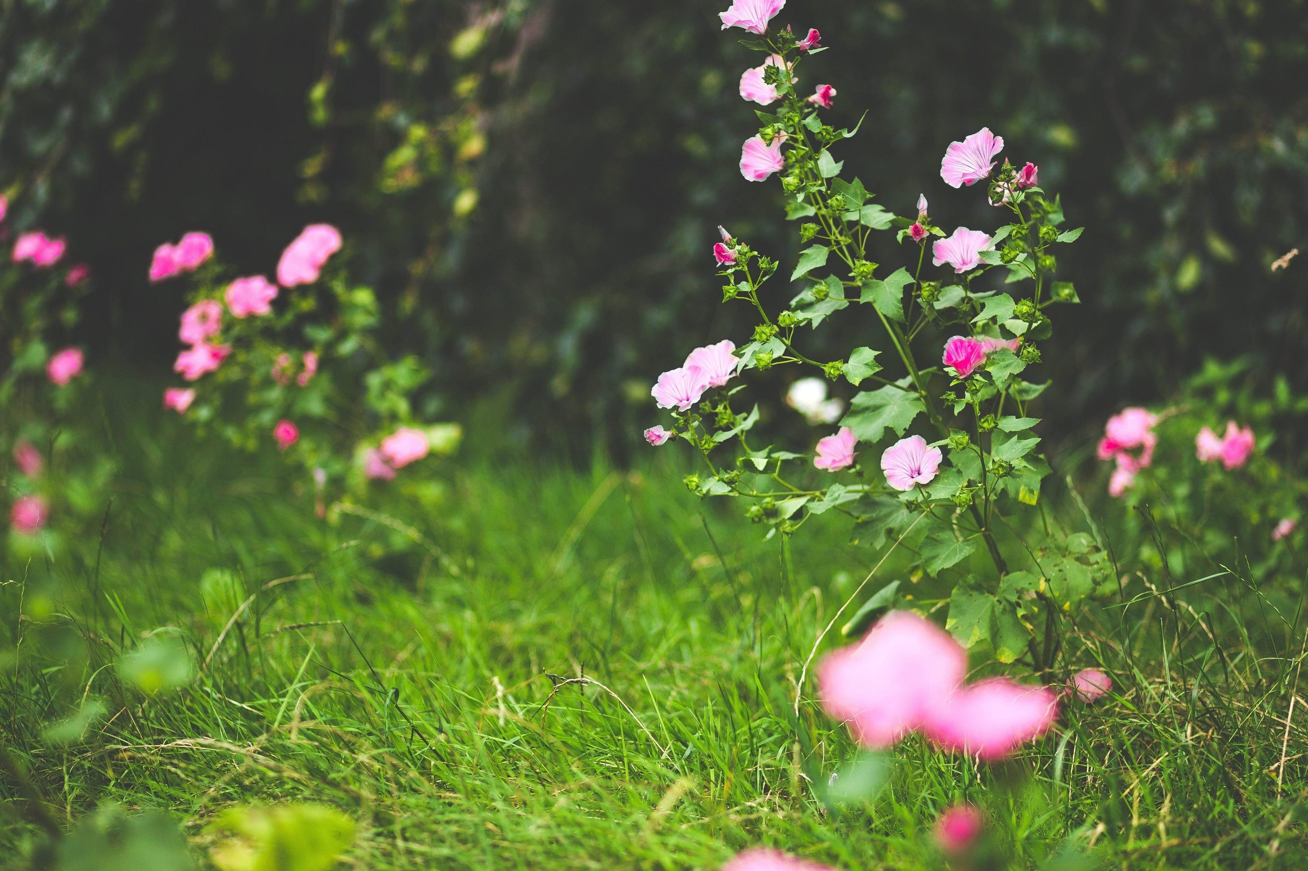 Imagen gratis p talo flor flor hierba jard n pradera for Hierba jardin