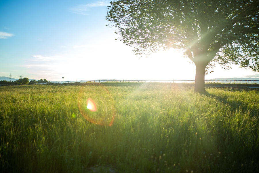 sunshine, nature, sky, summer, sun, grass