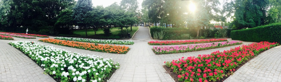 garden, pavement, panorama, colorful, flower