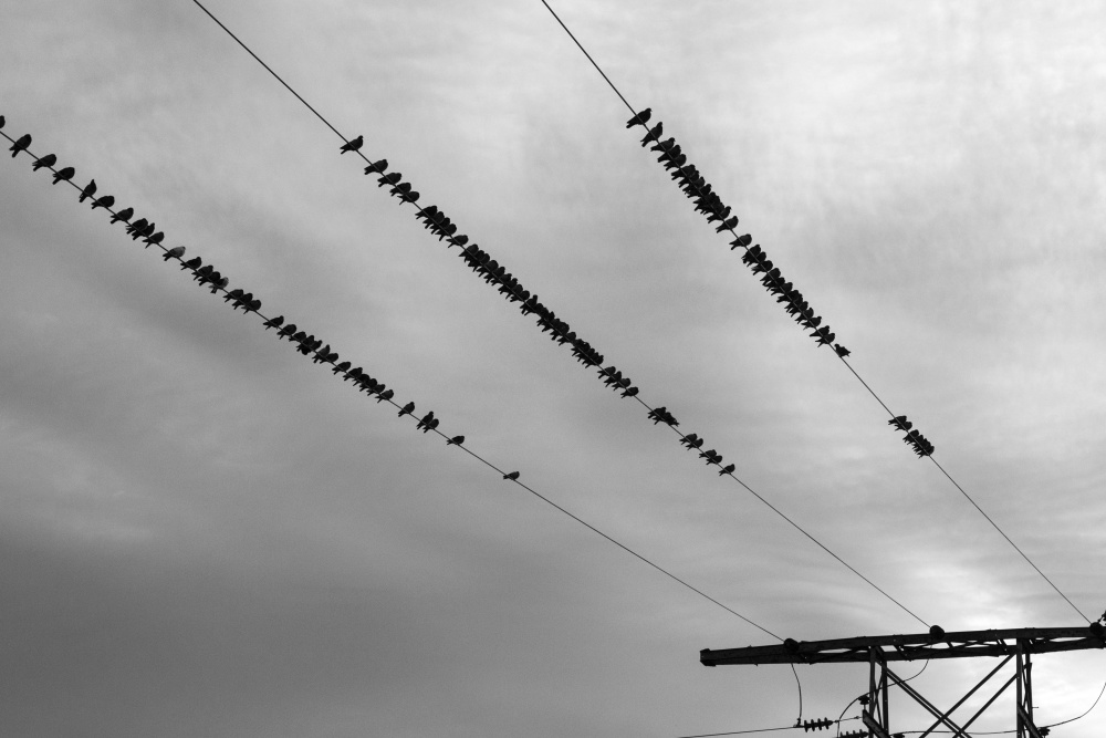 flock, bird, wire, electricity, sky
