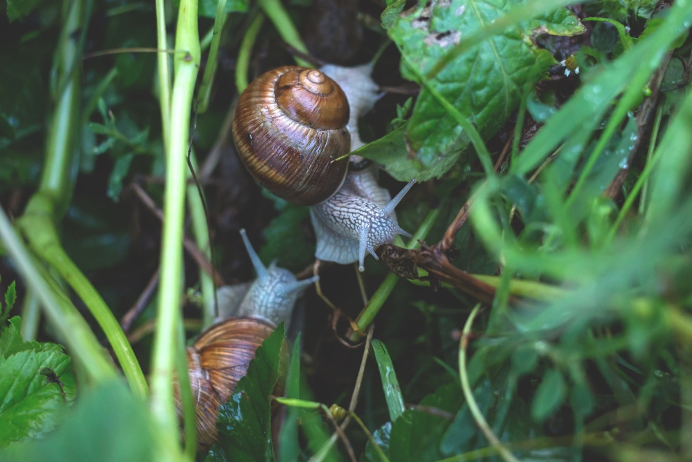 snail, green leaves, snail, gastropod, invertebrate