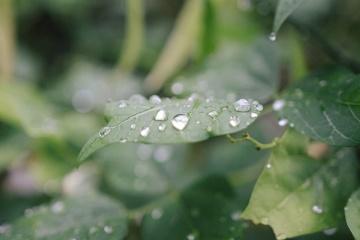 Lluvia, agua, verde, hoja, mojado