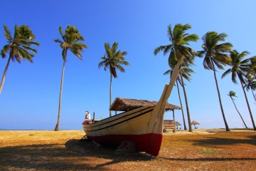 palm trees, blue sky, boat, beach, sky, sand, landscape, summer
