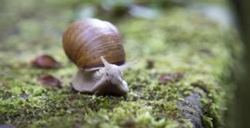 snail, moss, macro, gastropod, mollusk, invertebrate, animal