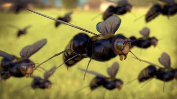 Honigbiene, Makro, Insekt, Insekt, Gliederfüßer