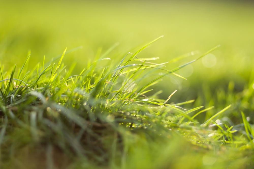 green grass, leaf, grass, lawn, field, plant, landscape