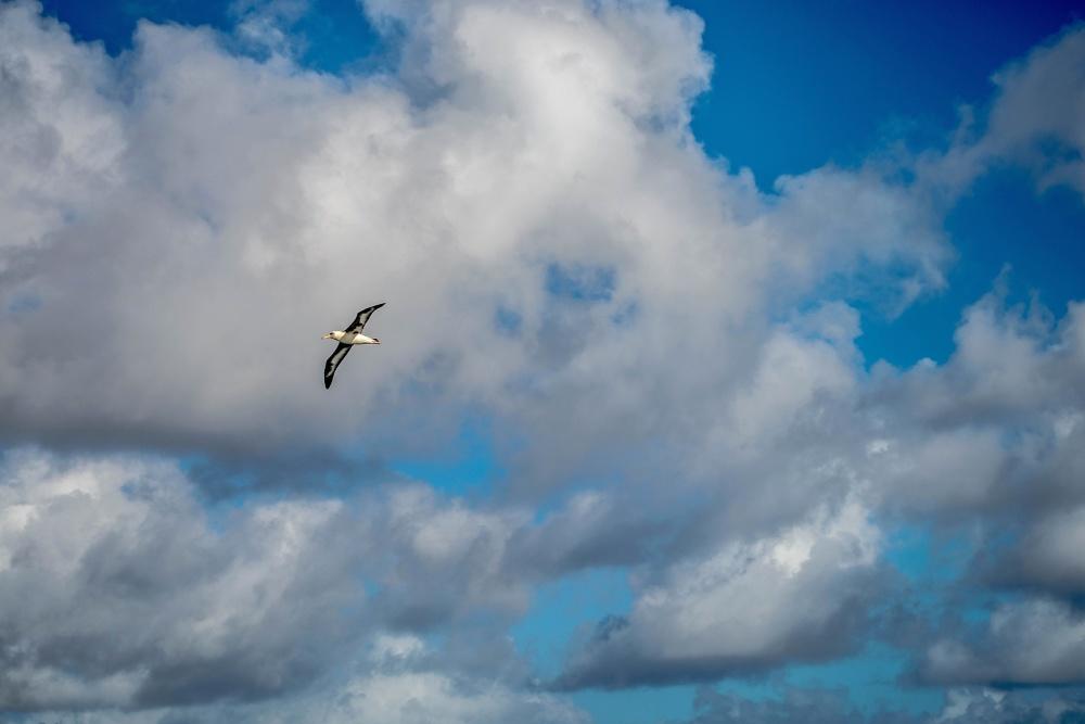 bird, blue sky, cloud, air, wind, landscape