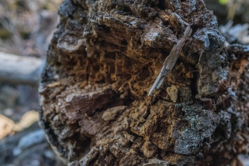 firewood, tree, macro, detail
