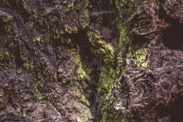 Mousse, arbre, chêne, forêt, paysage