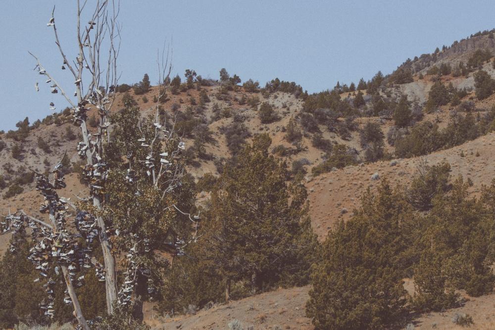 cipela, drvo, krajolik, planine, stijene, brda
