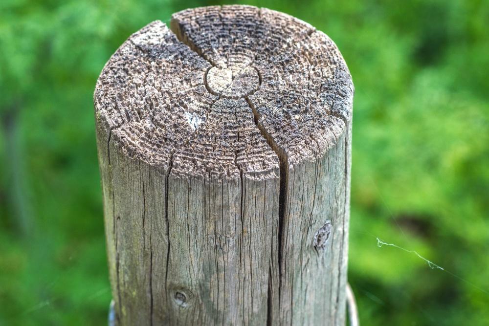 madeira, marrom, detalhe, marrom, vegetação