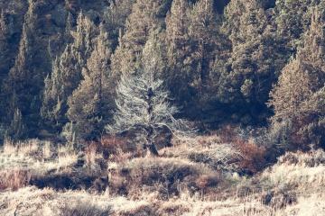 Bosque, autimn, paisaje, cañón, montaña, árbol